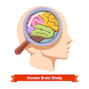 Lupa ampliando dentro da cabeça humana