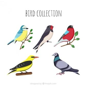 Mão coleção Pássaro desenhado