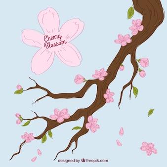 Mão desenhada fundo de ramo da árvore de cereja