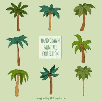 Mão, desenhado, palma, árvores, jogo, diferente, tipos