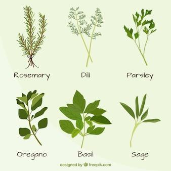 Mão variedade desenhada de plantas definir