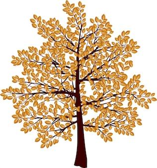 Outono árvore