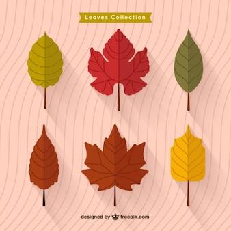 Outono Plano Deixa Colecção