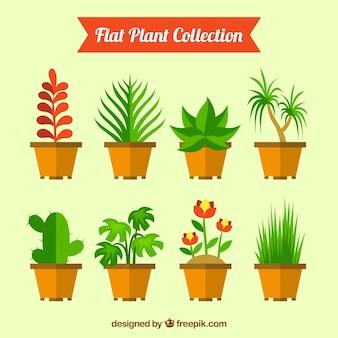 Pacote de plantas planas