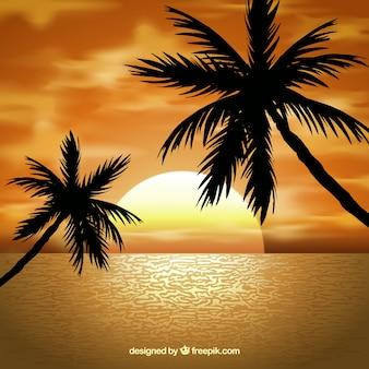 Paisagem com as palmeiras no por do sol