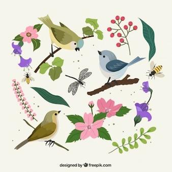 pássaros bonitos, insetos e flores definir