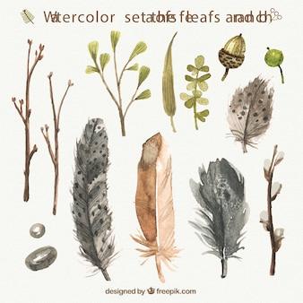 Penas aguarela, folhas e ramos