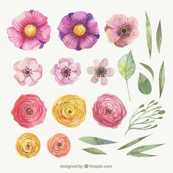 Pintados à mão flores da primavera