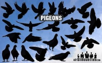 pombos vetor todas as silhuetas