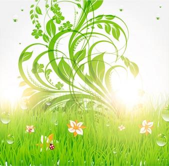 Prado floral ao longo beleza do verão