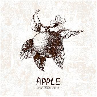 Projeto da maçã desenhada mão
