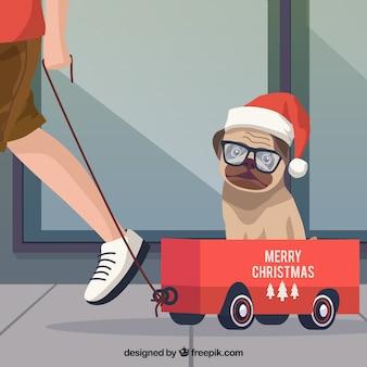 Pug de natal em um carrinho de mão