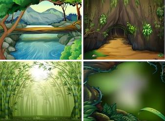 Quatro cenas florestais diferentes