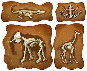 Quatro fósseis diferentes ilustração subterrânea