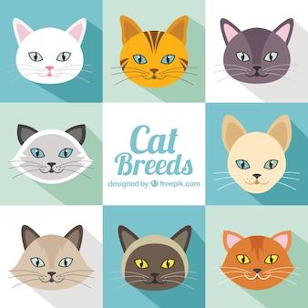 Raças do gato embalar em design plano