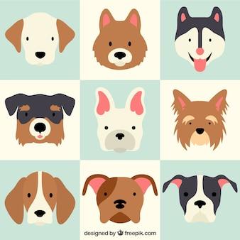 Raças cão adorável