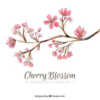 Ramo com flores de cerejeira no estilo da aguarela