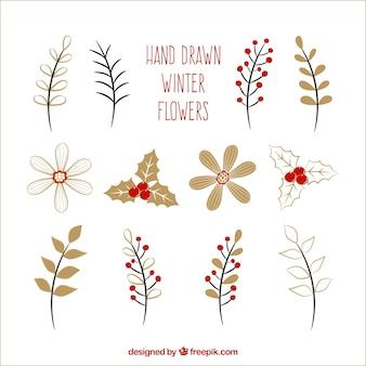 Seleção de flores desenhadas à mão para o inverno