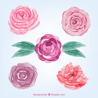 Seleção de rosas de aquarela