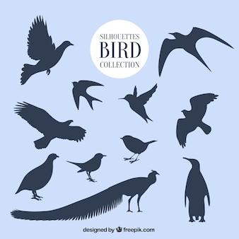 Silhuetas coleção de pássaros