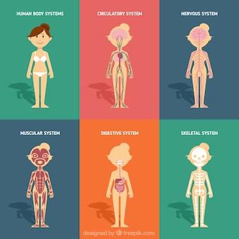 Sistemas do corpo humano em design plano