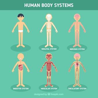 sistemas do corpo humano