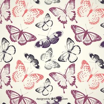 Teste padrão de borboletas