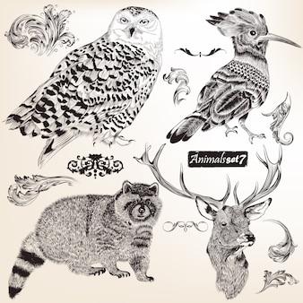 Tinha desenhado Coleção dos animais