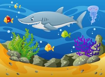Tubarão e outros animais marinhos debaixo d'água