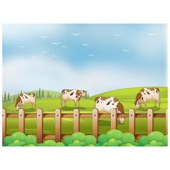 Vacas pastam no prado