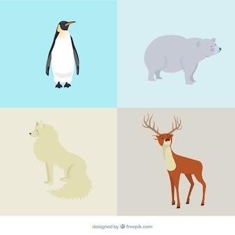 Variedade de animais árticos