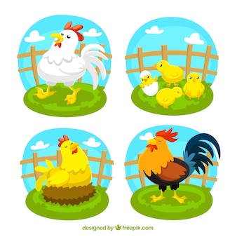 Variedade de aves de capoeira