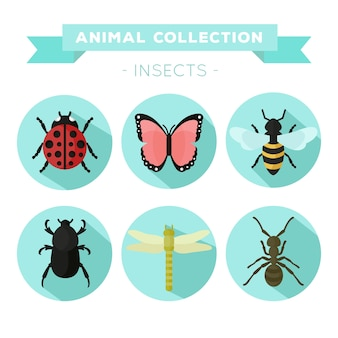 Variedade de insetos em design plano