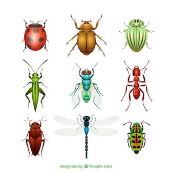 Variedade de insetos