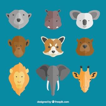 Variedade de rostos nove animais '