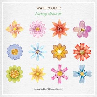Watercolor coleção bonito flor