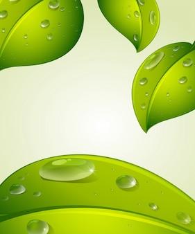 Andare verde