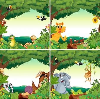 Animali e foreste