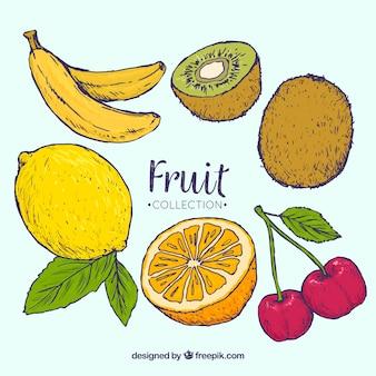 Assortimento di frutti fantastici disegnati a mano