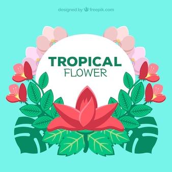 Bella priorità bassa del fiore tropicale