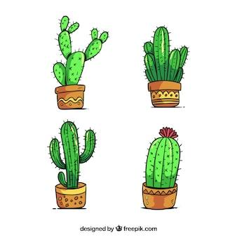Cactus impostato