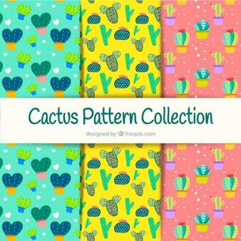 Collezione colorata del cactus
