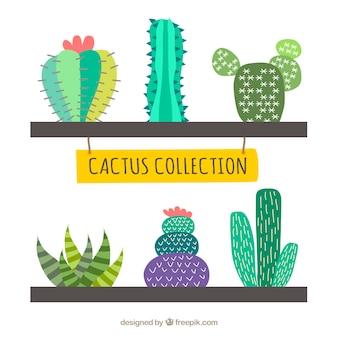 Collezione creativa del cactus
