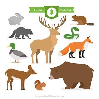 Collezione di animali della foresta disegnato a mano