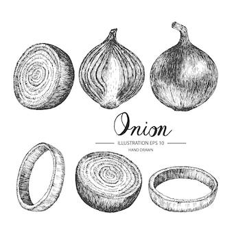 Collezione di cipolle disegnate a mano