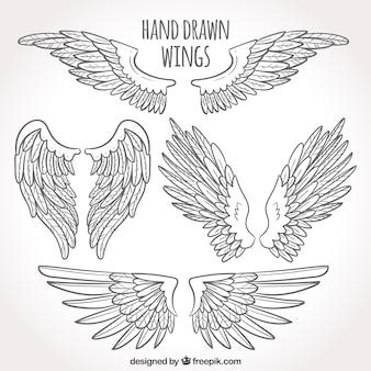 Confezione di ali disegnate a mano