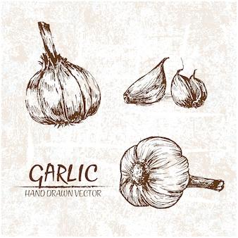 Disegnata a mano disegno aglio