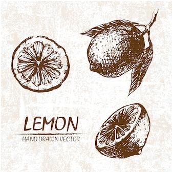 Disegnata a mano disegno di limone