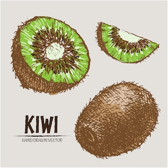 Disegnata a mano disegno kiwi