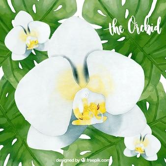 Disegno di sfondo dell'orchidea